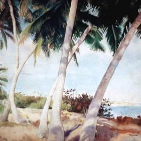 PuertoRicoPalmTrees